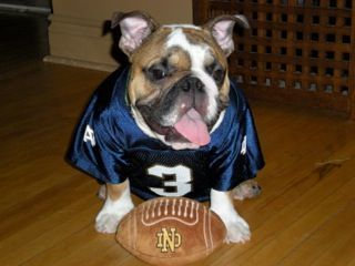 #3 Dog with football
