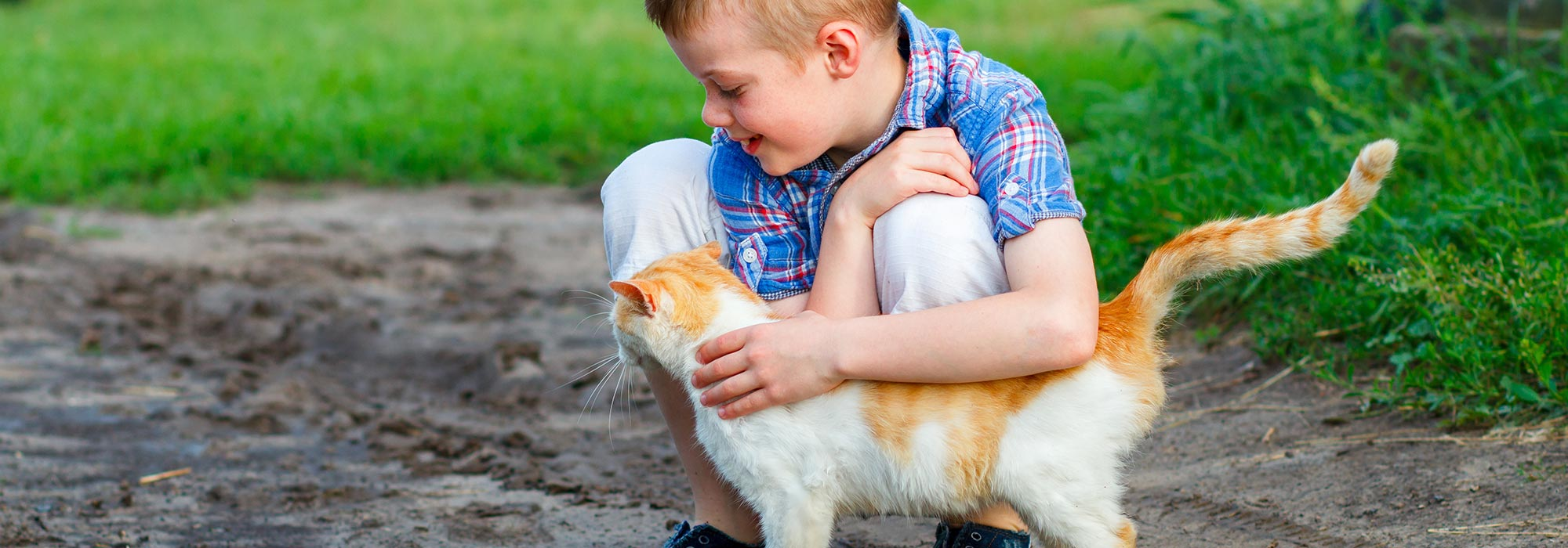 Boy petting Cat