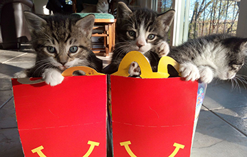 Kittens in Happy Meals