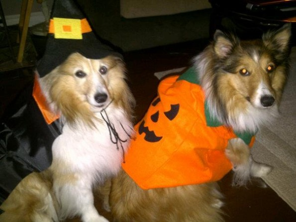 Dogs with Costume