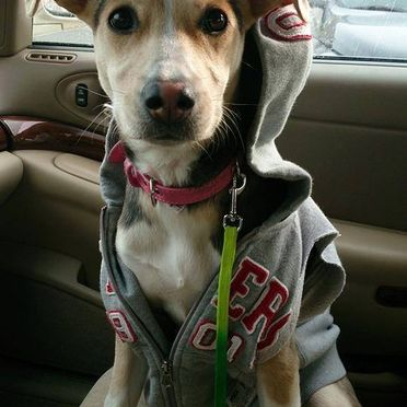 Cute dog with hoody